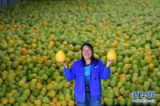 (社会)(4)广西鹿寨:做大做强产业 提高脱贫质量