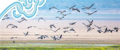 鄱阳湖候鸟的守护人