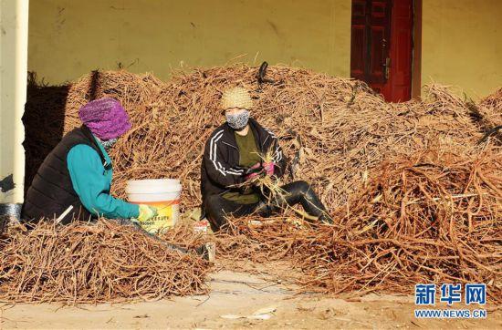 """(图文互动)(3)固沙又增效 我国第八大沙漠发展""""甜蜜产业"""""""