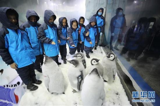 (社會)(1)廣東珠海:小學生零距離接觸帝企鵝