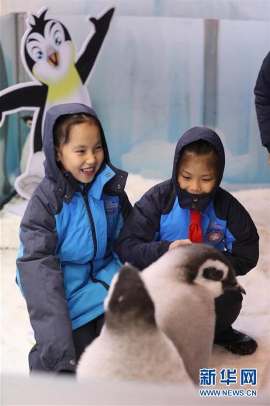 (社會)(2)廣東珠海:小學生零距離接觸帝企鵝