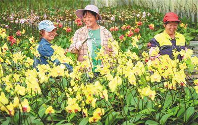 海口:兰花俏花农笑截至去年底,全省花卉生产面积达19.6万亩,年产值达54亿元。其中,海南省鲜切叶种植面积4.13万亩,产量占全国总产量的75.7%以上,成为全国鲜切叶切枝种植面积最大的省份,产品主要销往全国各大中城市。【详细】