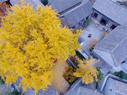 初冬徐州户部山层林尽染 景色美如画