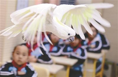 鸟岛鹦鹉飞进课堂
