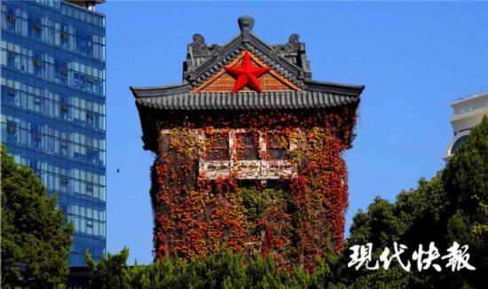南京正式入冬 爬山虎悄悄紅了臉