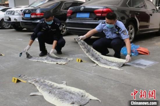 昆明海关截获8张走私入境鳄鱼皮