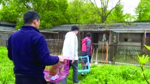 揚州女子直播養猴牽出大案 16隻獼猴被解救