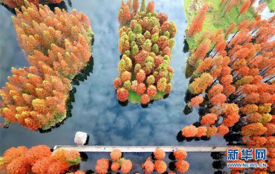 (环境)(1)上海:冬日暖景