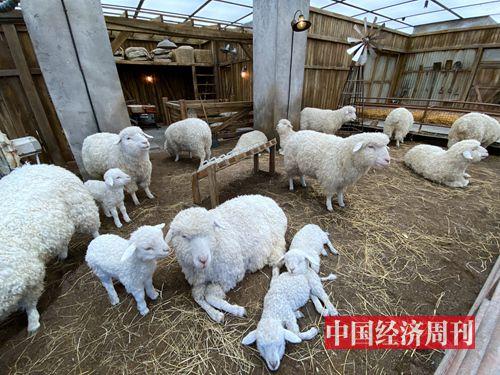 """羊圈中的""""人造羊""""以假乱真,并且可以与顾客互动"""