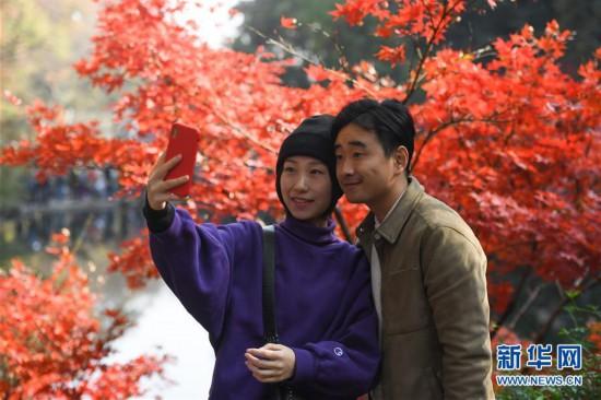 (环境)(5)麓山枫叶红