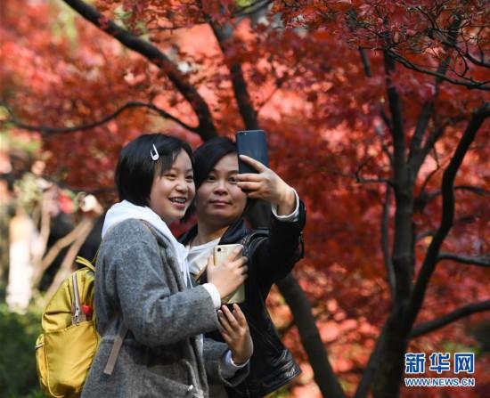 (环境)(7)麓山枫叶红