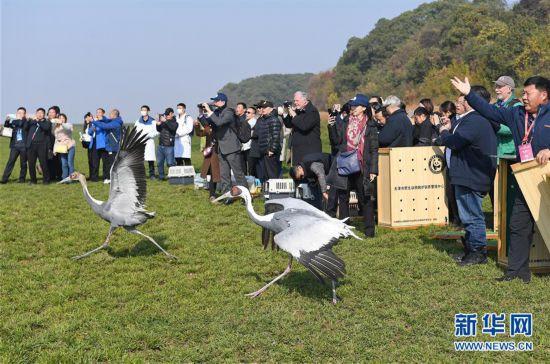 120只珍稀候鸟放飞鄱阳湖
