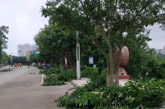 绿化队员工正在修剪树枝(宁明县住房和城乡建设局供图)