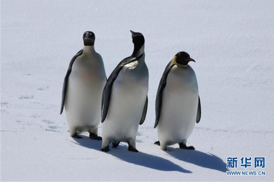 """(""""雪龙""""探南极)(1)""""雪龙2""""号的""""好奇来客"""""""