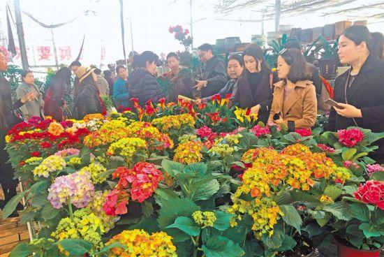 拉萨越来越多居民购买绿植花卉美化居室增添生机
