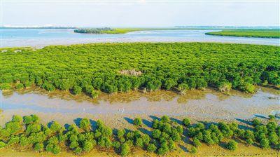 海口东寨港:浪拍岸红树茂