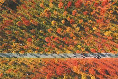 广州天河湿地公园:满园黄金叶 你我画中人