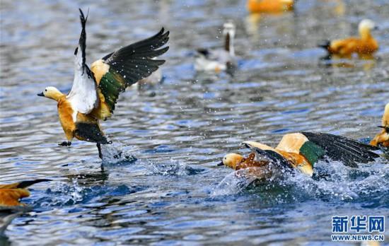 (美丽中国)(5)拉萨:龙王潭公园鸟尽欢