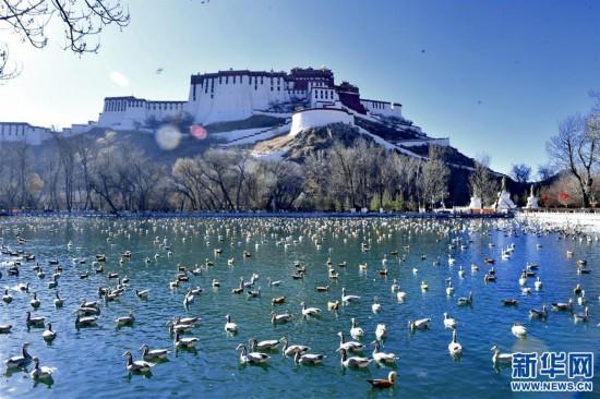 (美丽中国)(1)拉萨:龙王潭公园鸟尽欢