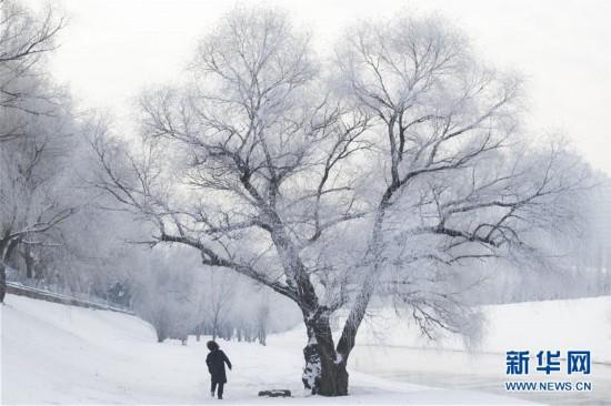 哈尔滨冬至雾凇美景