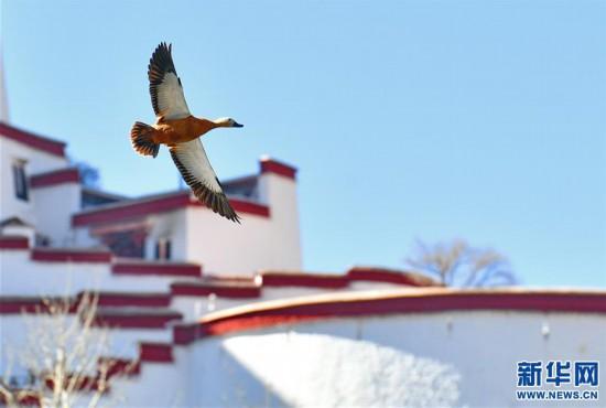 (美丽中国)(4)拉萨:龙王潭公园鸟尽欢