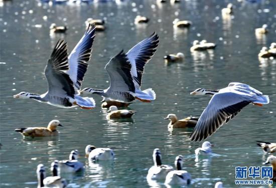 (美丽中国)(2)拉萨:龙王潭公园鸟尽欢