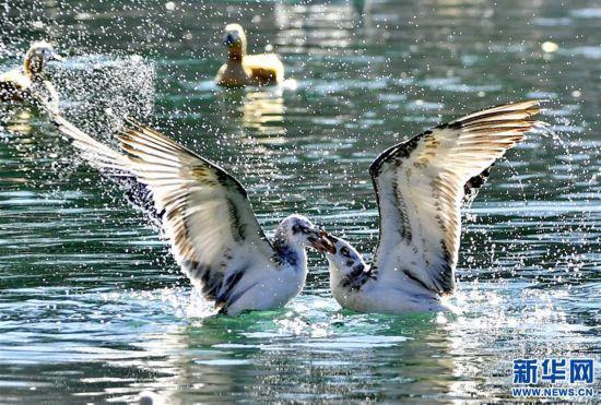 (美丽中国)(3)拉萨:龙王潭公园鸟尽欢