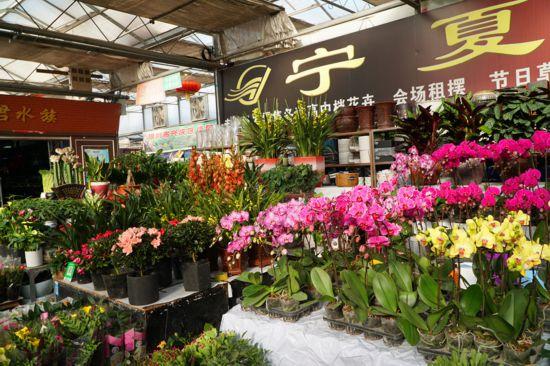 临近新年 选几盆鲜花相伴迎新年