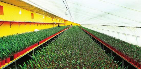 公主岭市大力推进设施园艺产业高质量发展