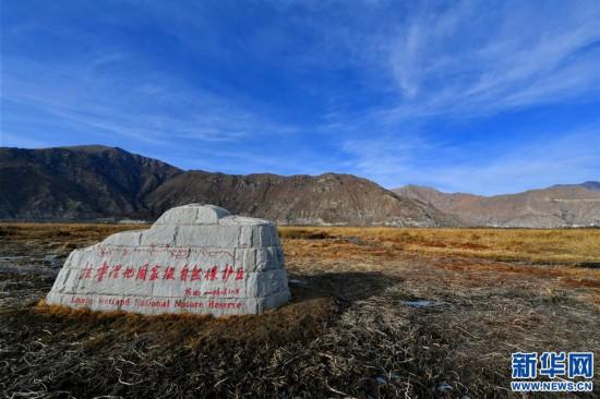 (環境)(2)拉魯濕地冬韻