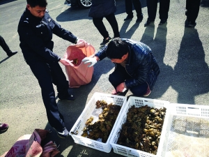 连云港9人非法猎捕145万只蟾蜍被判修复生态