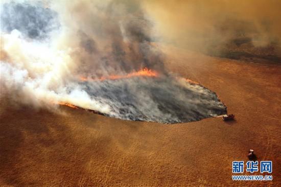 国际观察:林火肆虐数月澳政府应对不力挨批