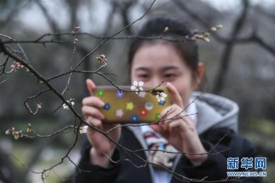 (美丽中国)(3)江南赏梅胜地开启迎春赏梅季