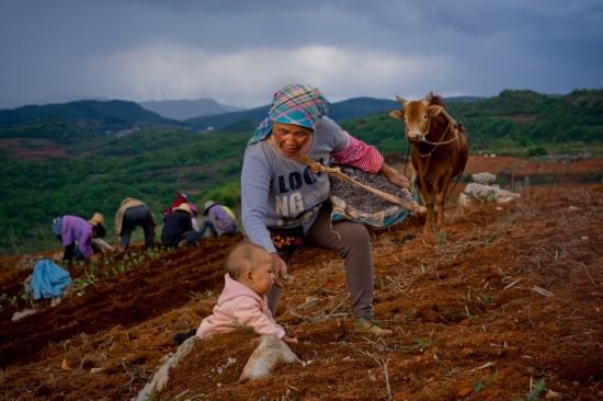 """《2019中国电商兴农发展报告》:""""拼农货""""直连城乡需求"""
