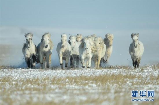 (社會)(2)雪原奔馬