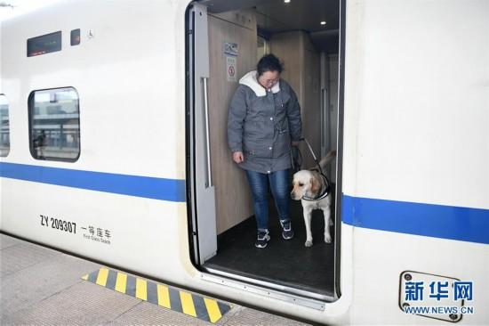 (关注春运)(7)导盲犬乘高铁体验春运
