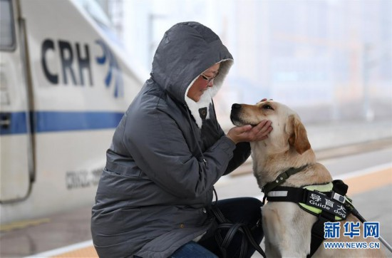 (關注春運)(1)導盲犬乘高鐵體驗春運