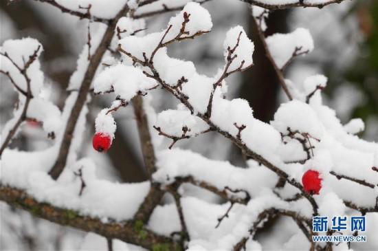 (新华视界)(2)塔什干降雪