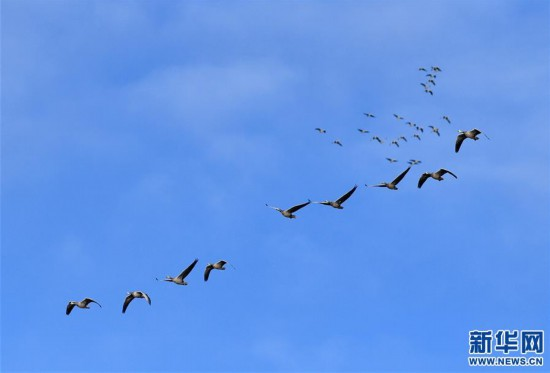 (新华视界)(1)西藏拉萨:百鸟翩跹聚湿地