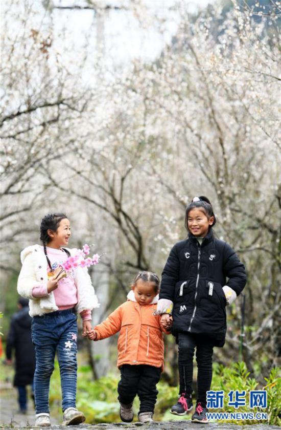 (环境)(4)贵州荔波:赏梅好时节
