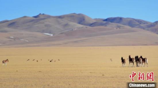 中国最高海拔县双湖县牧民雅鲁藏布江边迎接新生活