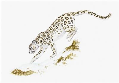 保护雪豹我学者领衔国际研究是个新开始