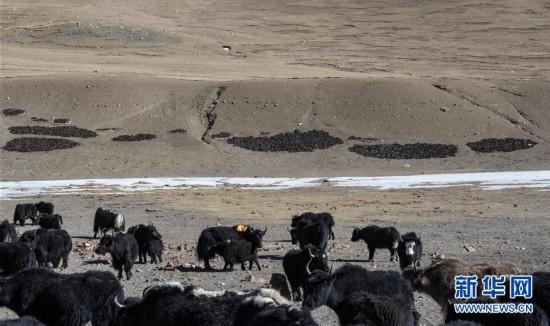 (社会)(1)珠峰脚下的冬季牧场