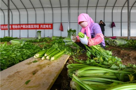 【阻击疫情 守护家园】记者实地采访,银川菜农滞销蔬菜如何快速卖完