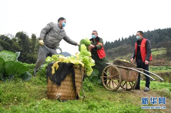 重庆:疫情下的乡村蔬菜配送小队