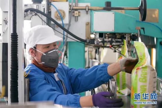 (聚焦疫情防控)(2)黑龙江:粮油加工企业加紧生产