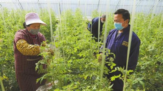 华州区:农业园里务工忙