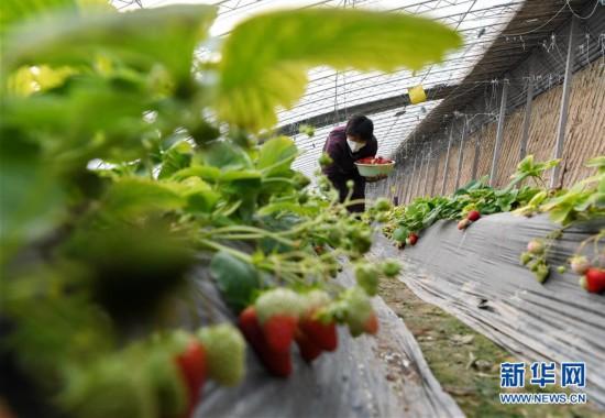 (经济)(2)河北石家庄:防疫农时两不误