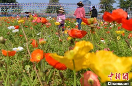 マスクをつけて福州花海公園を散策し、花畑のなかを歩く市民と子供(撮影・張斌)。