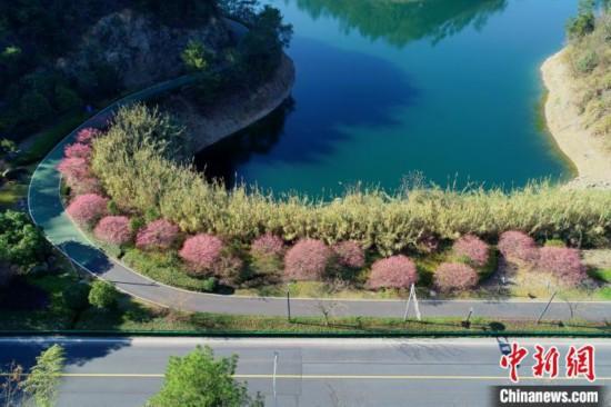 杭州千島湖、さまざまな花が咲き誇り春満開 浙江省